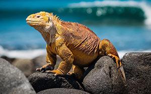 Galapagos – Vortrag für Fans von Natur- und Tierfotos